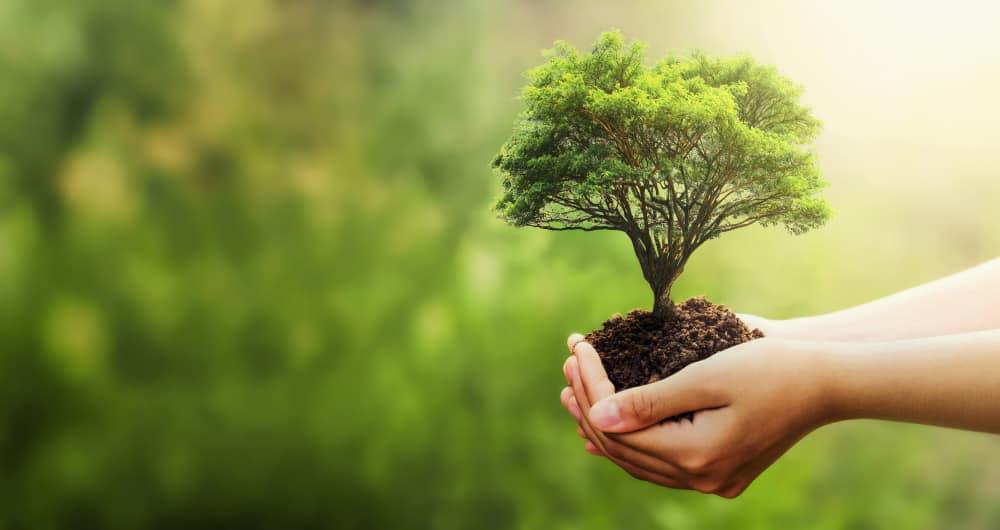hand holding tree blur green nature 101 Aneka Slogan Terkini untuk Pendidikan, Motivasi, Kesehatan dan Agama